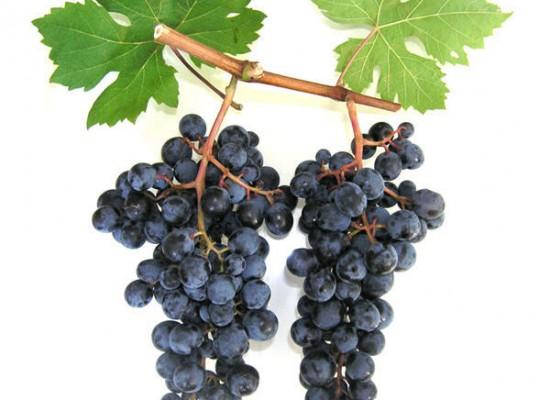 Продажа виноградника 6 гектаров около г.Петрич