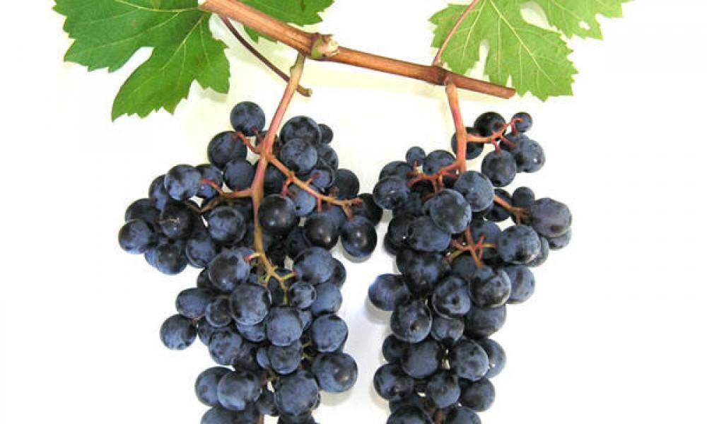 Продажа виноградника 18 гка  г.Сандански